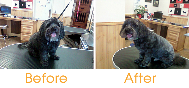 Before & After Grooming